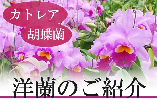 Top_bana01_1