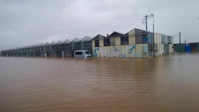 千葉県館山市、「早かわ洋蘭」2019年9月の台風被害について