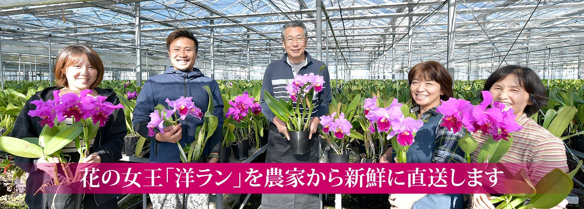 花の女王「洋ラン」を農家から新鮮に直送します